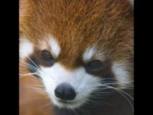 Стрим Sing_sing в Дота 2 на QPAD Red Pandas